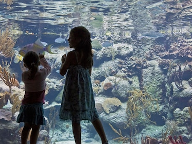 Children at the aquarium in Xcaret Park, Playa del Carmen