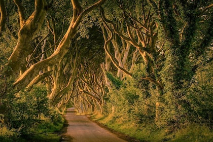 Tree-lined road in Ireland