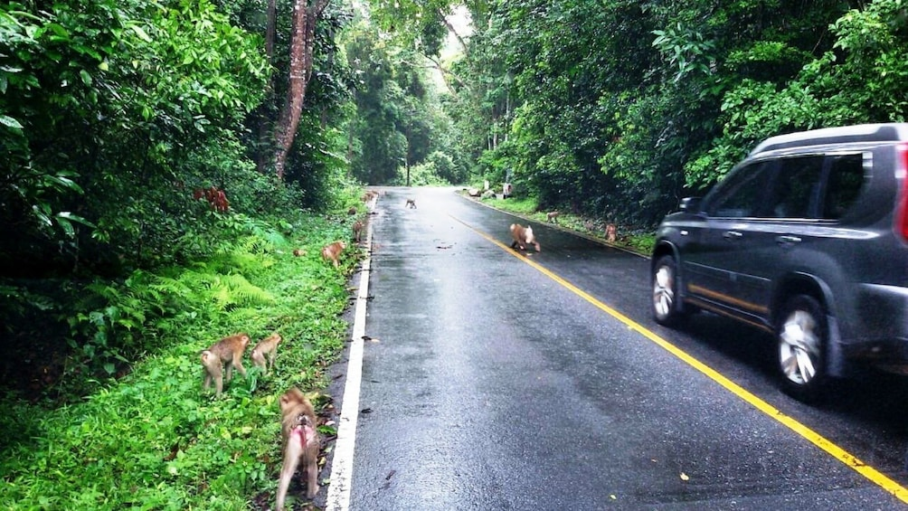 Show item 3 of 9. Car stopped on the side of the road looks at Monkeys