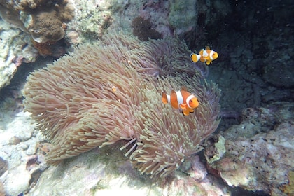 Gorgeous coral reefs and tropical fish in Koh Rok Nok
