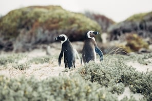 Full Day Cape of Good Hope and Penguin Colony