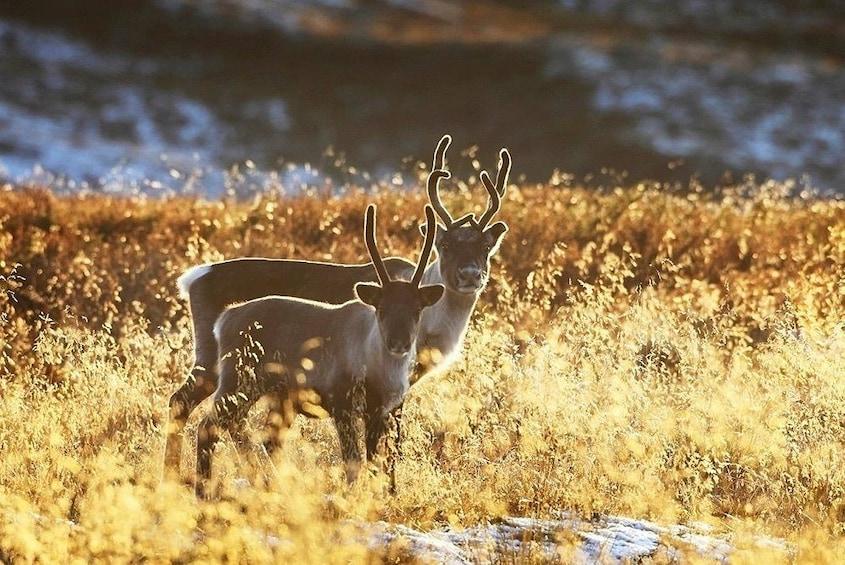 Rovaniemi: Lake Canoeing trip to Reindeer and Husky Farm