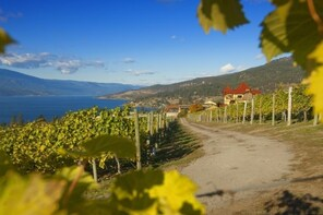 All-Inclusive 4 Hour Lake Country Wine Tasting Experience