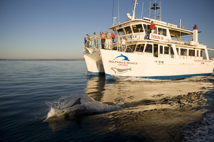 Show item 1 of 7. Boat near a dolphin in Jervis Bay
