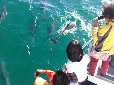 Boating passengers looking at dolphins in Jervis Bay