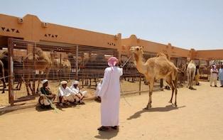 Private Al Ain City Tour