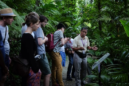Tour with guide in the jungle in Malaysia