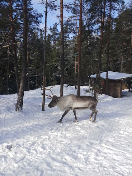 Show item 3 of 9. 5-hour sightseeing in Helsinki and Nuuksio Reindeer Park