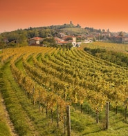 Wine Tasting Experience - Full Day Tour