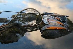Helsinki: Seaside Fishing with Salmon BBQ