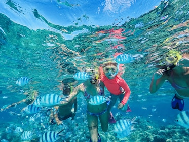 Snorkelers swimming with tropical fish in clear water