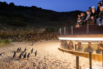 People watching penguins from an observation platform in Australia
