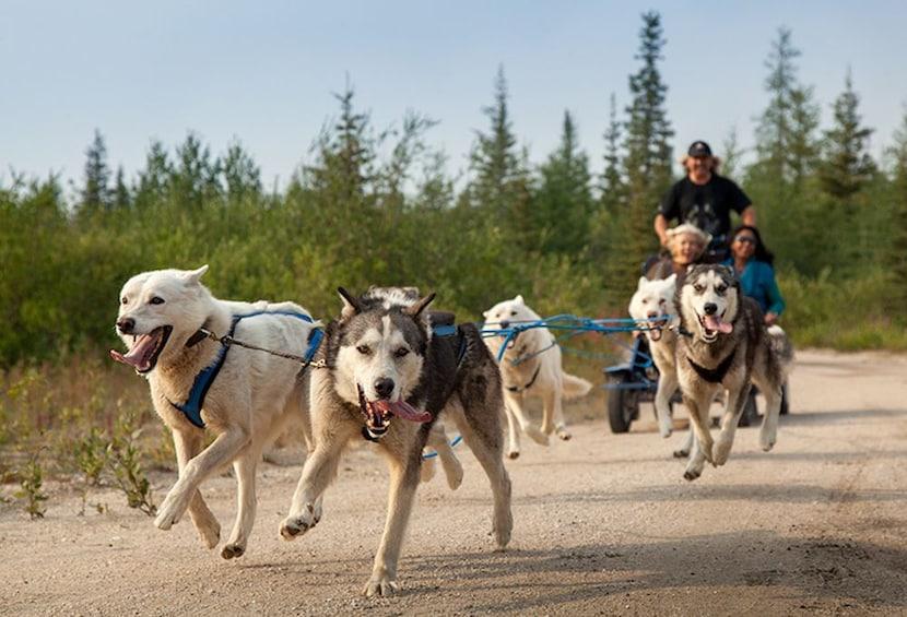 Show item 3 of 10. Rovaniemi: Summer Day in Ranua Zoo, Husky & Reindeer Farm