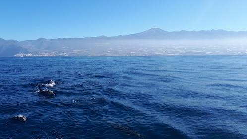 Dolphins at sea in Los Gigantes