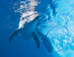 Visit Winter the Dolphin and Clearwater Beach