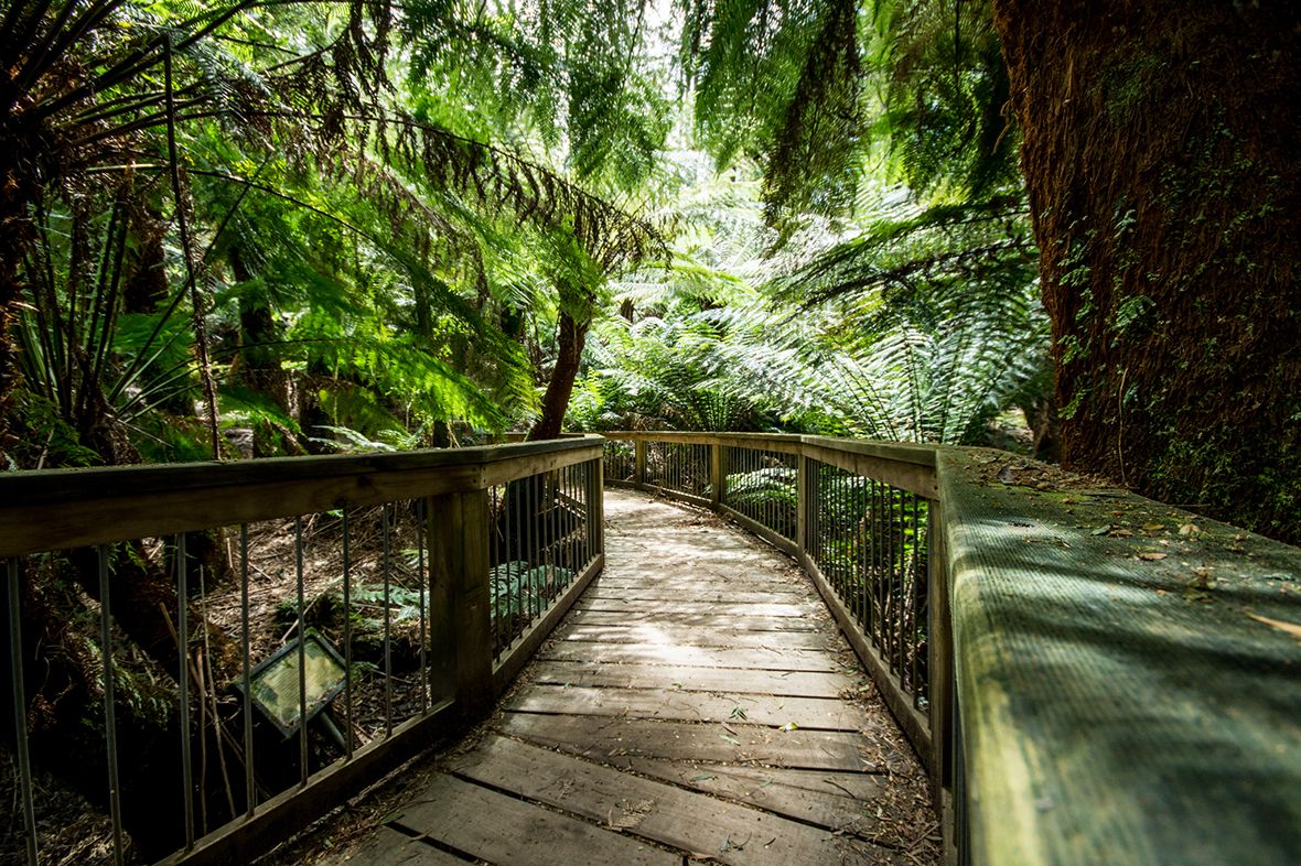 Boarded walkway through the jungle in Australia