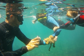Snorkelling with motor boat excursion