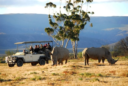 Tour group sees rhinos at Inverdoorn Game Reserve in Cape Town