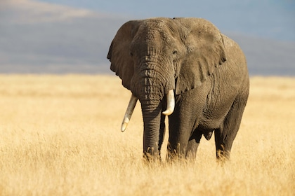 Elephant at Inverdoorn Game Reserve in Cape Town