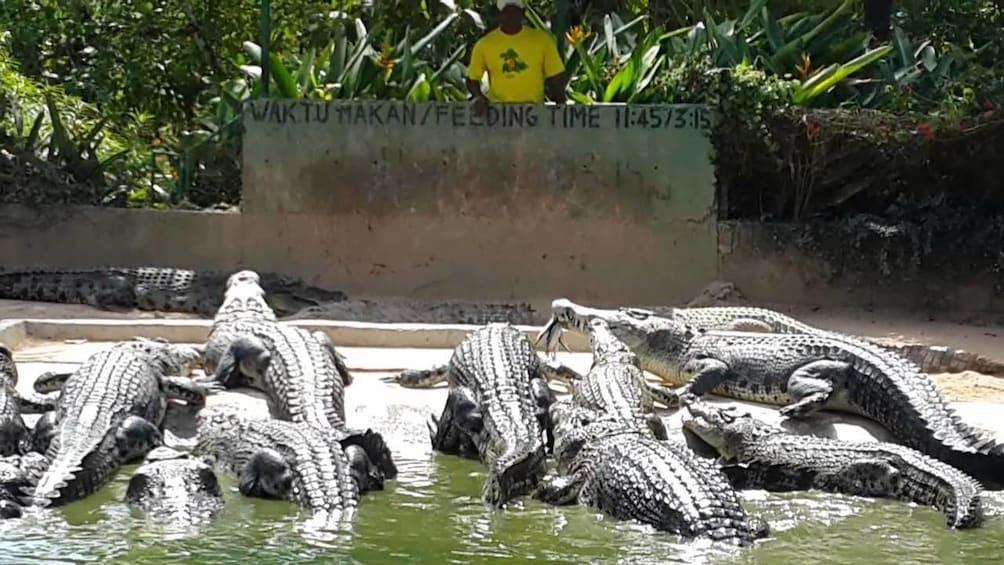 Show item 3 of 8. Crocodile Adventureland Langkawi Admission Ticket