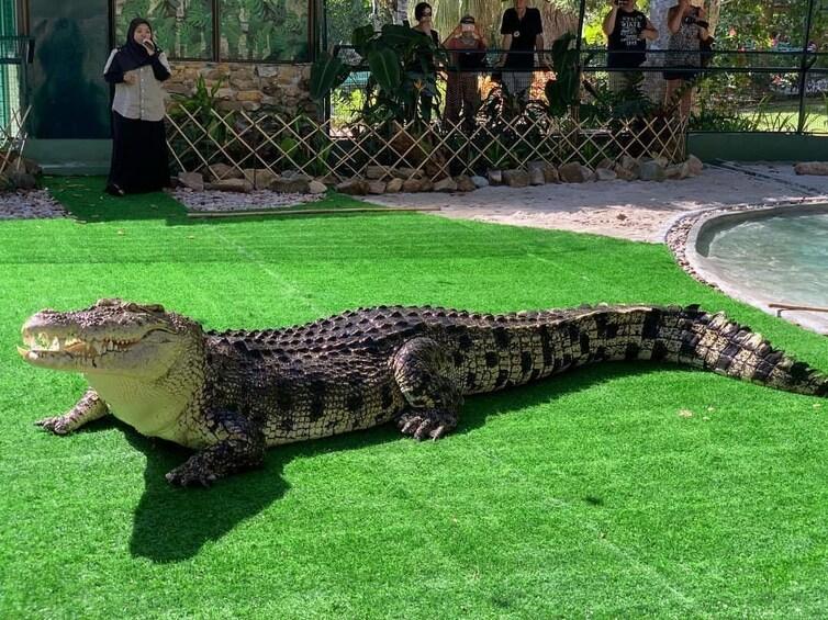 Show item 8 of 8. Crocodile Adventureland Langkawi Admission Ticket