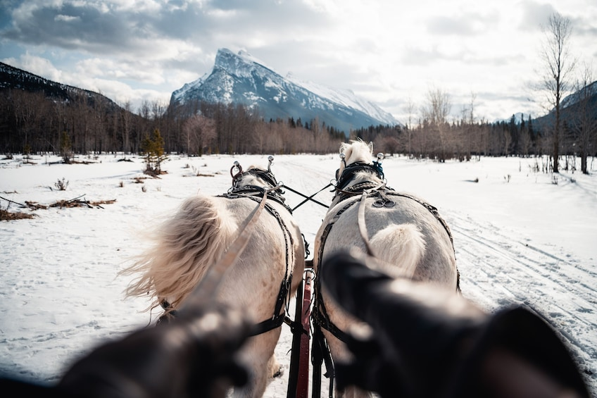 Show item 4 of 9. Horse-Drawn Sleigh Ride in Banff