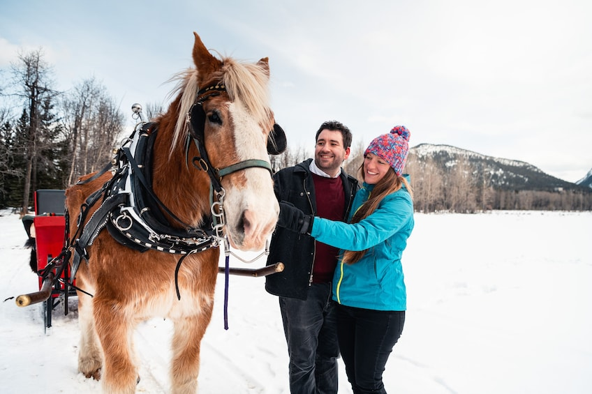 Show item 1 of 9. Private Horse-Drawn Sleigh Ride In Banff
