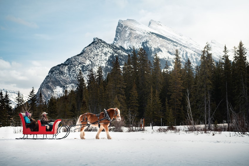 Show item 9 of 9. Private Horse-Drawn Sleigh Ride In Banff