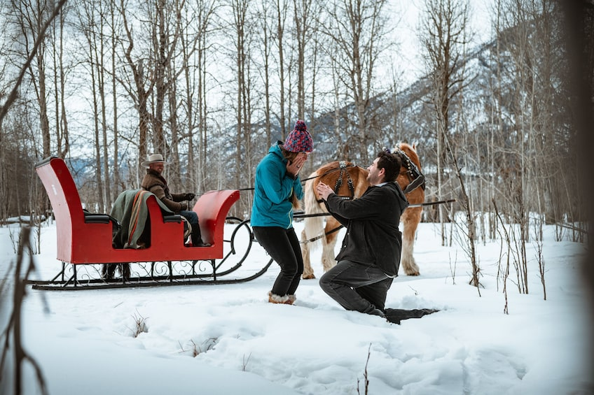 Show item 3 of 9. Private Horse-Drawn Sleigh Ride In Banff
