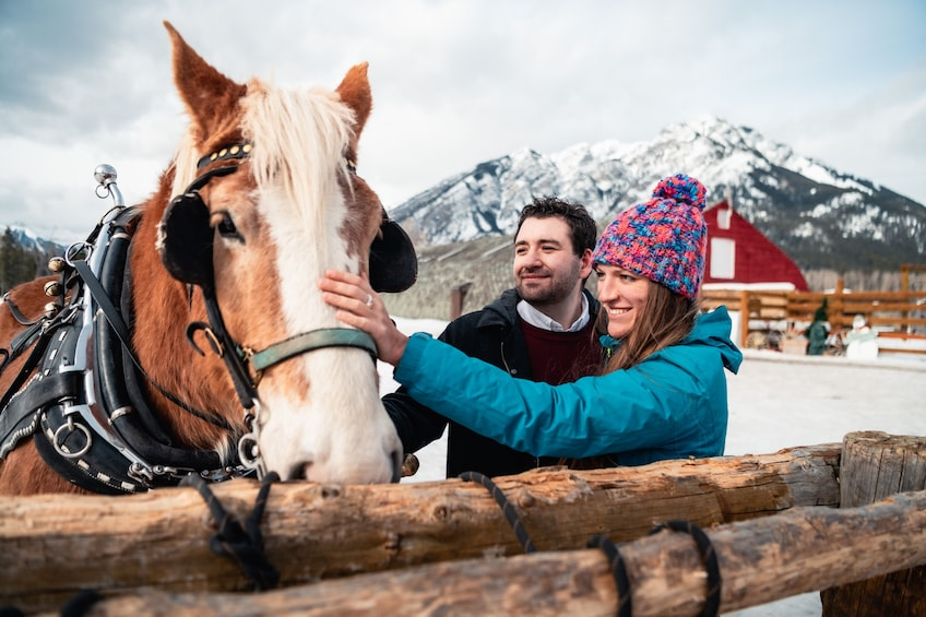 Show item 2 of 9. Private Horse-Drawn Sleigh Ride In Banff