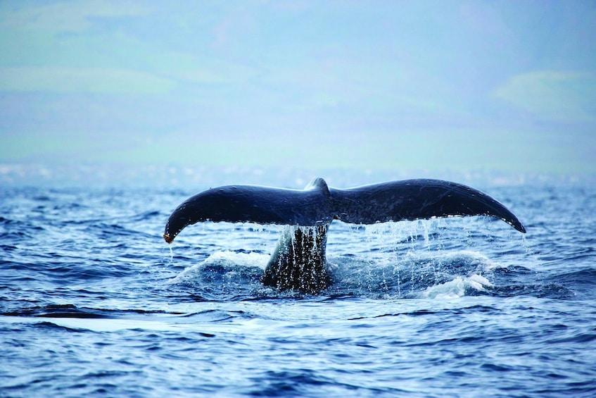 Show item 3 of 8. Whale Watching in Waimea