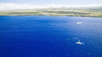 Kawaihae Whale Watching
