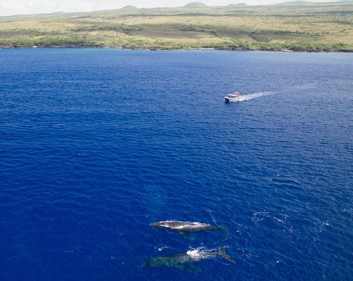 Show item 2 of 8. Whale Watching in Waimea