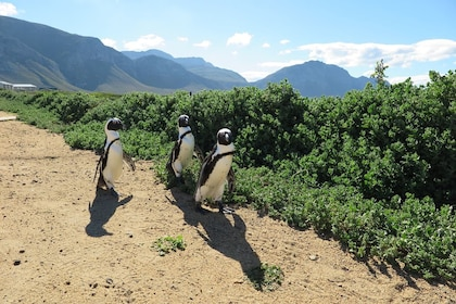 6 Day Garden Route & Addo Adventure Tour from Cape Town