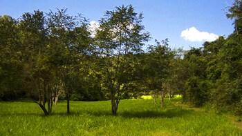 Ixpanpajul Full Day Tour (from Flores or Tikal)