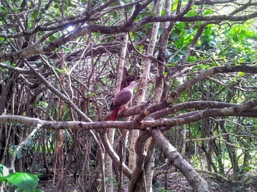 Bird on a tree at the Ile aux Aigrettes Nature Reserve
