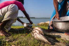 Fish, Cook and enjoy a Sri Lankan Lunch at a Village house