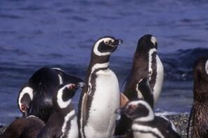 Magdalena & Marta Island Navigation (Penguin Tour)