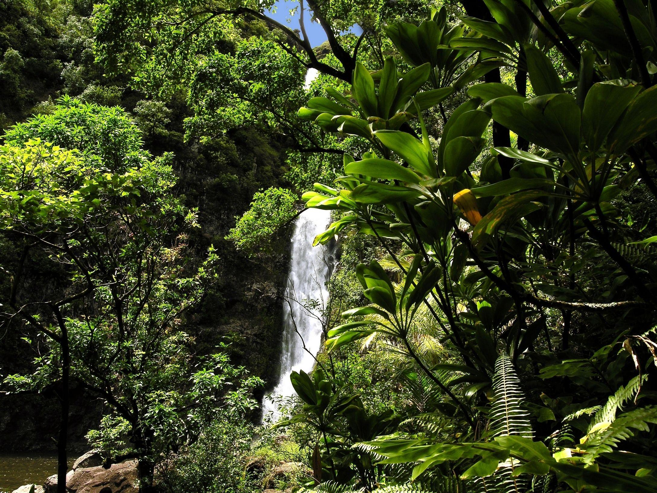 Temptation Tours - Rainforest Waterfall.jpg