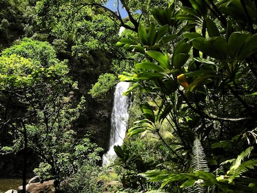 Temptation Tours - Rainforest Waterfall.jpg
