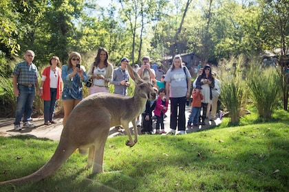 Tourists looking at a kangaroo at the Nashville Zoo
