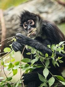 Monkey at the Nashville Zoo