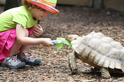 Girl feeding a turtle lettuce at the Nashville Zoo