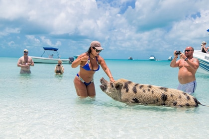 Woman in swimsuit pets large pig in waters of Exuma, Bahamas