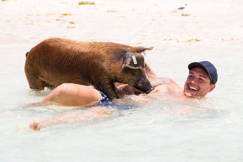 Show item 5 of 10. Full-Day Exuma Adventure with Swimming Pigs
