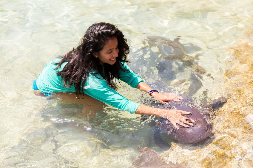 Show item 5 of 10. Woman pets sea creature in shallow waters of Exuma, Bahamas