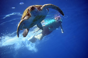 Snorkelling with Turtles and Kayaking with Dolphins
