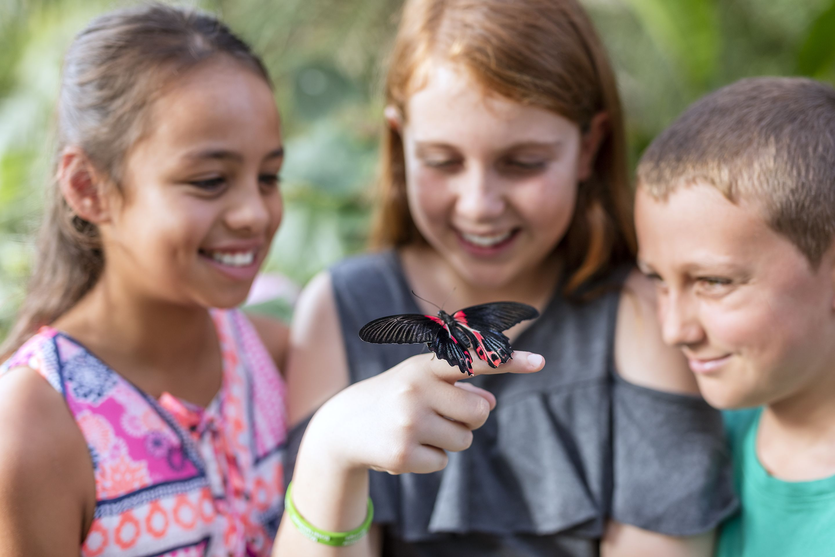 All Attractions Butterfly Creek Tickets (Excludes Train)