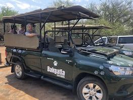 Full day Pilanesberg Open Vehicle Safari from Johannesburg