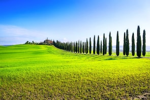 Montalcino, Montepulciano & Pienza day tour from Florence